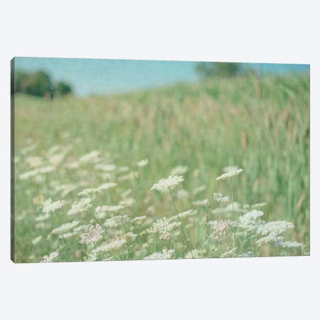 Yarrow Field Canvas Print #WAC3190} by Elizabeth Urquhart Canvas Art