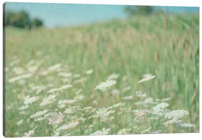 Yarrow Field Canvas Art Print