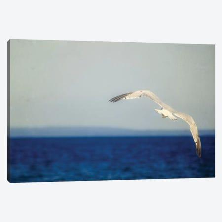 Blue Lake I Canvas Print #WAC3191} by Elizabeth Urquhart Canvas Artwork