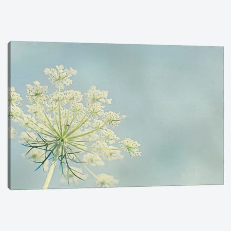 Flower on Blue I Canvas Print #WAC3195} by Elizabeth Urquhart Canvas Print