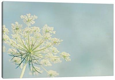 Flower on Blue I Canvas Print #WAC3195