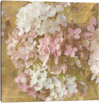 Gilded Hydrangea II Canvas Art Print