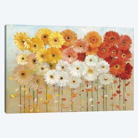 Daisies Spring Canvas Print #WAC3264} by Danhui Nai Art Print