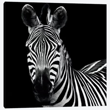 Zebra II Canvas Print #WAC3265} by Debra Van Swearingen Art Print