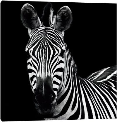 Zebra II Canvas Art Print