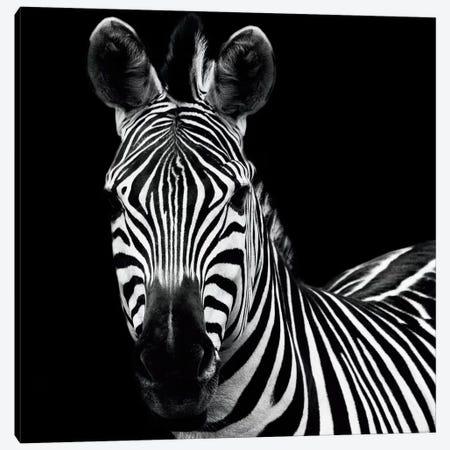 Zebra II Canvas Print #WAC3265} by Debra Van Swearingen Art Print