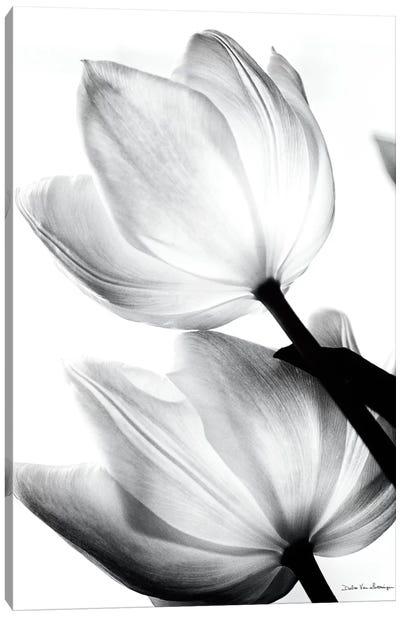 Translucent Tulips II Canvas Art Print