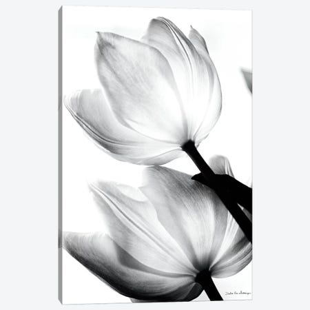 Translucent Tulips II Canvas Print #WAC3266} by Debra Van Swearingen Art Print