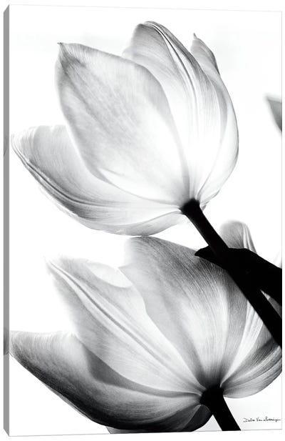 Translucent Tulips II Canvas Art Print