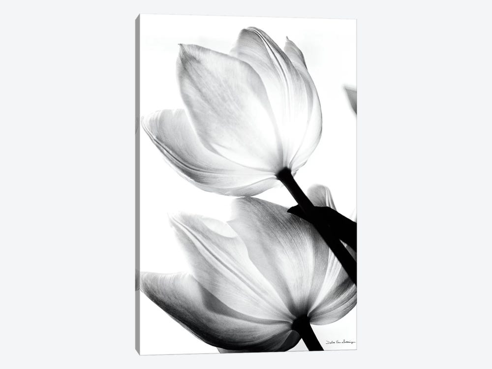Translucent Tulips II by Debra Van Swearingen 1-piece Art Print