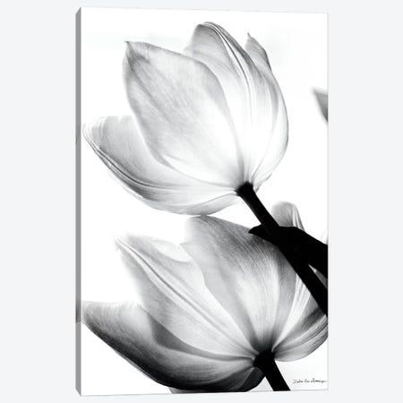 Translucent Tulips II Canvas Print #WAC3266} by Debra Van Swearingen Art Print