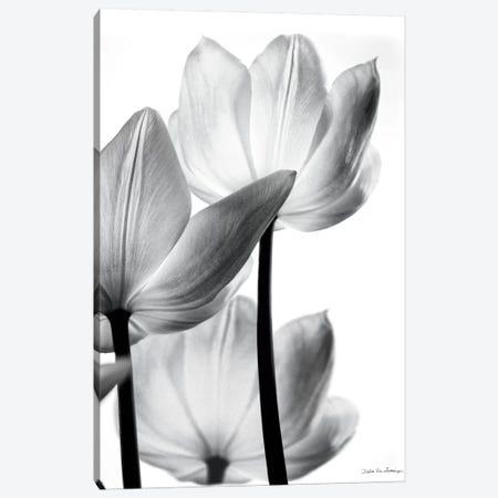 Translucent Tulips III Canvas Print #WAC3267} by Debra Van Swearingen Canvas Print