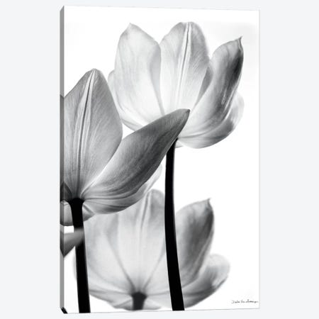 Translucent Tulips III Canvas Print #WAC3267} by Debra Van Swearingen Canvas Print