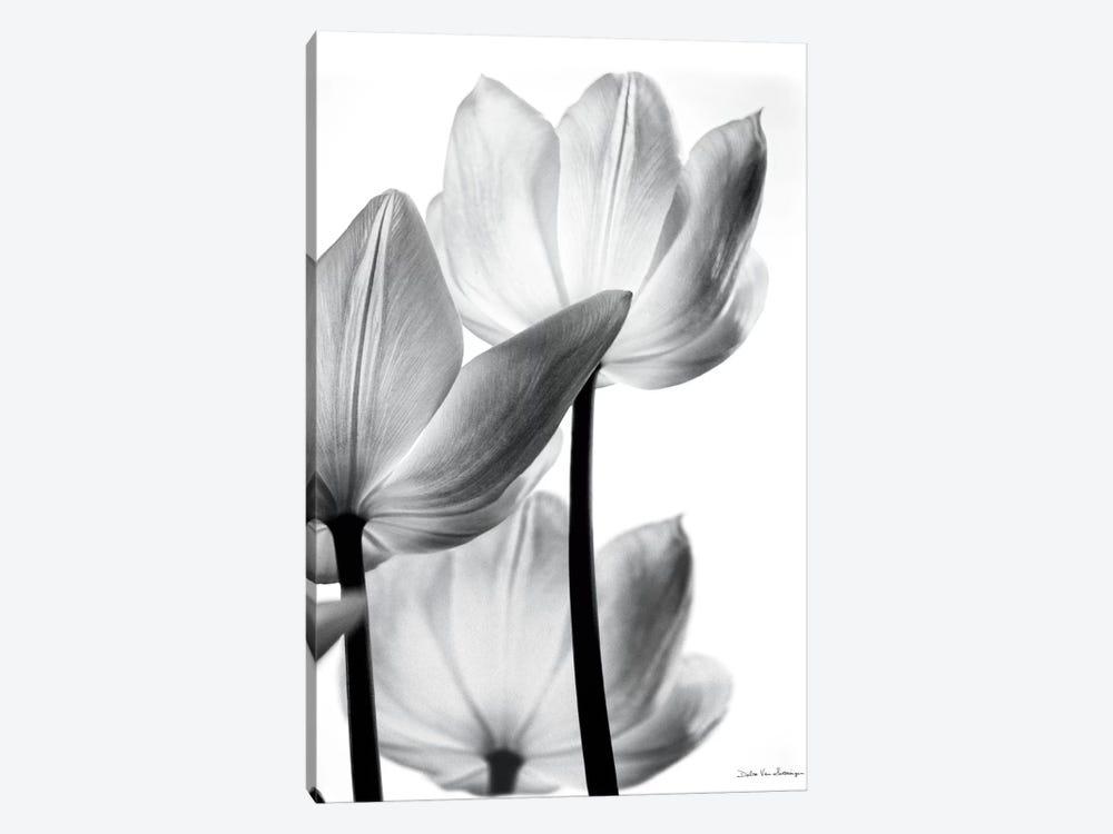 Translucent Tulips III by Debra Van Swearingen 1-piece Canvas Wall Art