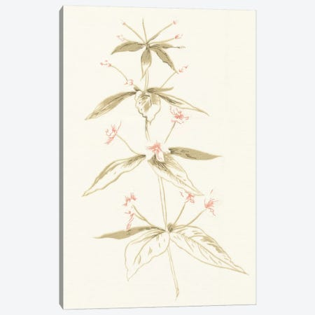 Flowers on White III Canvas Print #WAC3298} by Wild Apple Portfolio Art Print