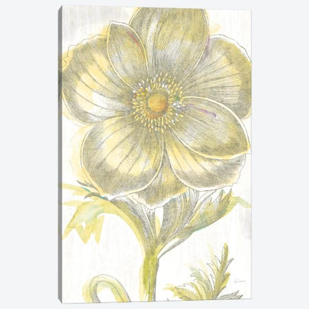 Belle Fleur Jaune II Canvas Print #WAC3703} by Sue Schlabach Canvas Art Print