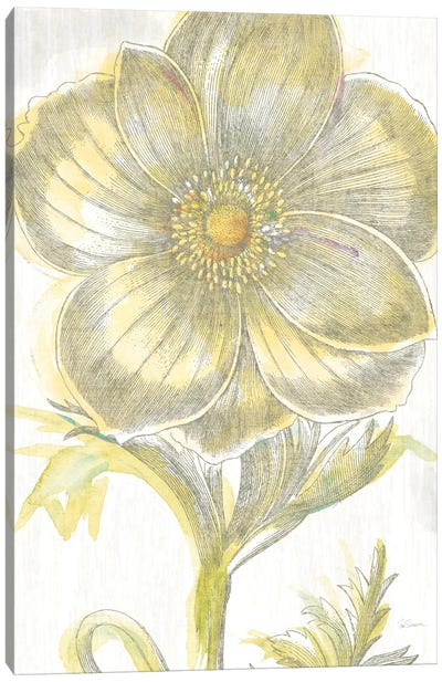 Belle Fleur Jaune II by Sue Schlabach Canvas Art Print