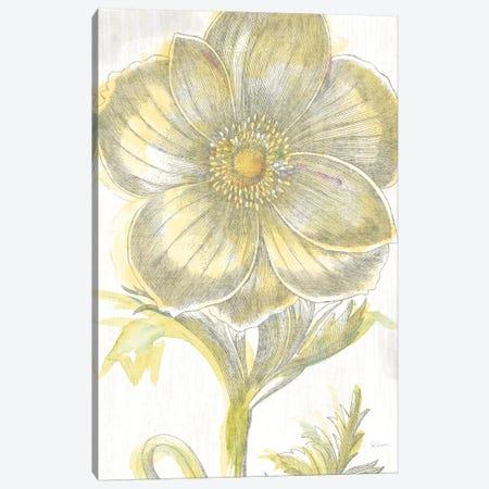 Belle Fleur Jaune II Canvas Print #WAC3703} by Sue Schlabach Canvas Art Print