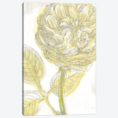 Belle Fleur Jaune III Canvas Print #WAC3704} by Sue Schlabach Canvas Wall Art
