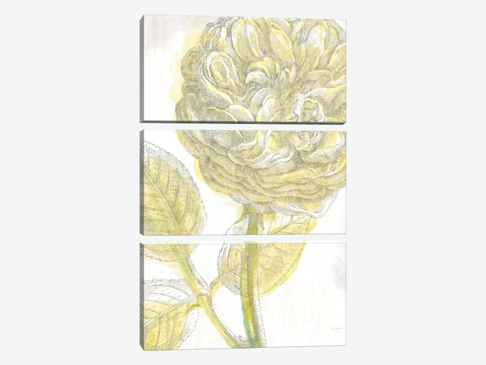 Belle Fleur Jaune III by Sue Schlabach 3-piece Canvas Print