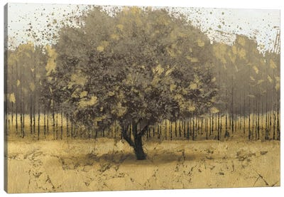 Golden Trees I Canvas Art Print
