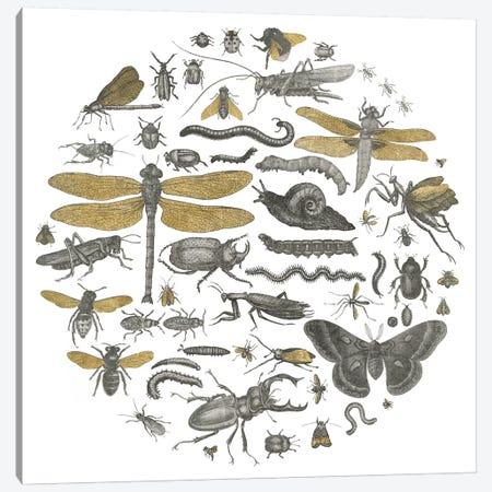 Insect Circle I Canvas Print #WAC3711} by Wild Apple Portfolio Canvas Wall Art