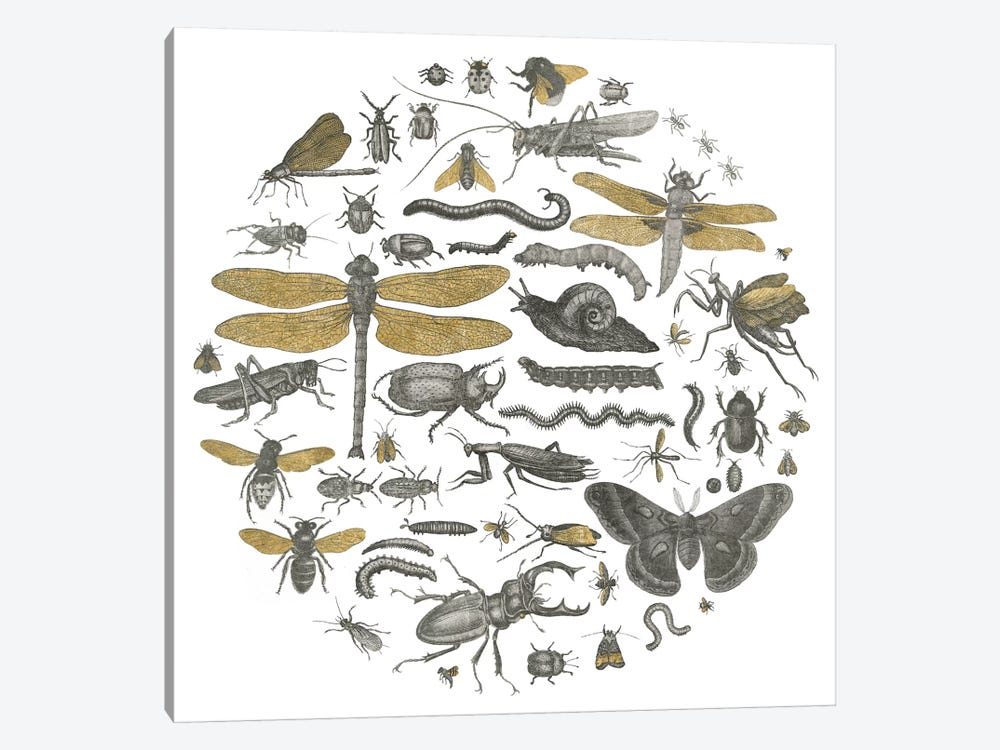 Insect Circle I by Wild Apple Portfolio 1-piece Canvas Art Print