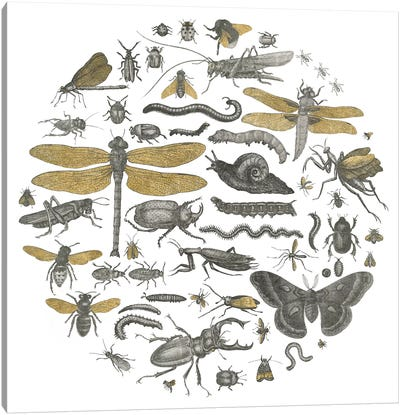 Insect Circle I Canvas Art Print