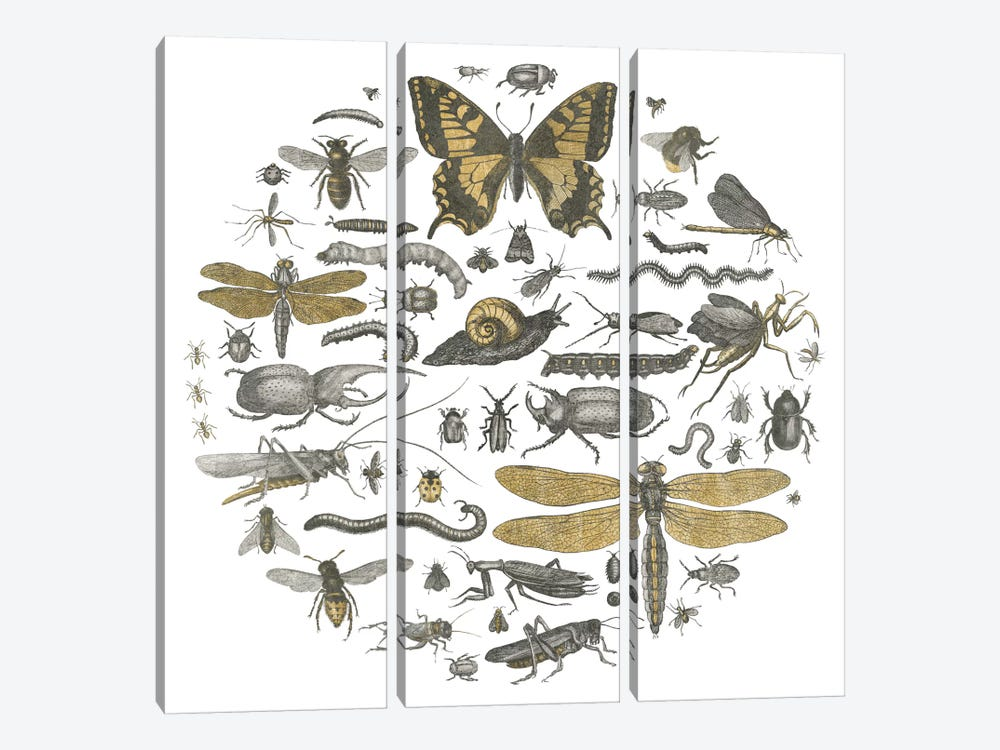 Insect Circle II by Wild Apple Portfolio 3-piece Canvas Artwork