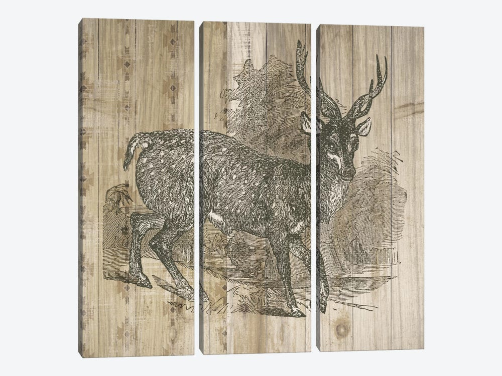 Natural History Lodge III by Elyse DeNeige 3-piece Canvas Artwork