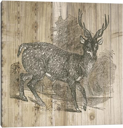 Natural History Lodge III Canvas Art Print