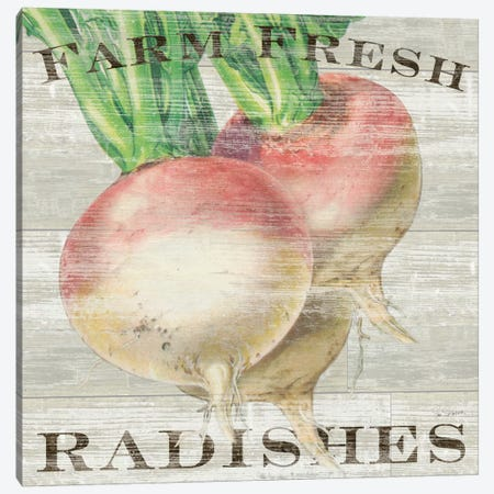 Farm Fresh Radishes Canvas Print #WAC3737} by Sue Schlabach Art Print