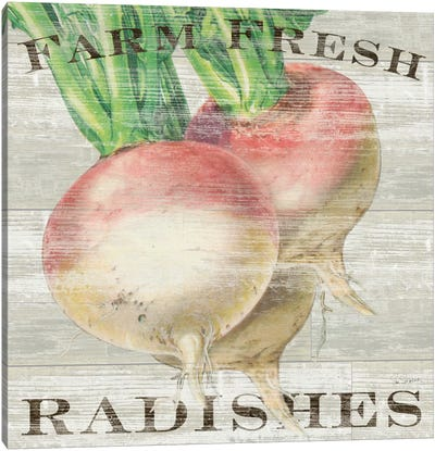 Farm Fresh Radishes Canvas Art Print