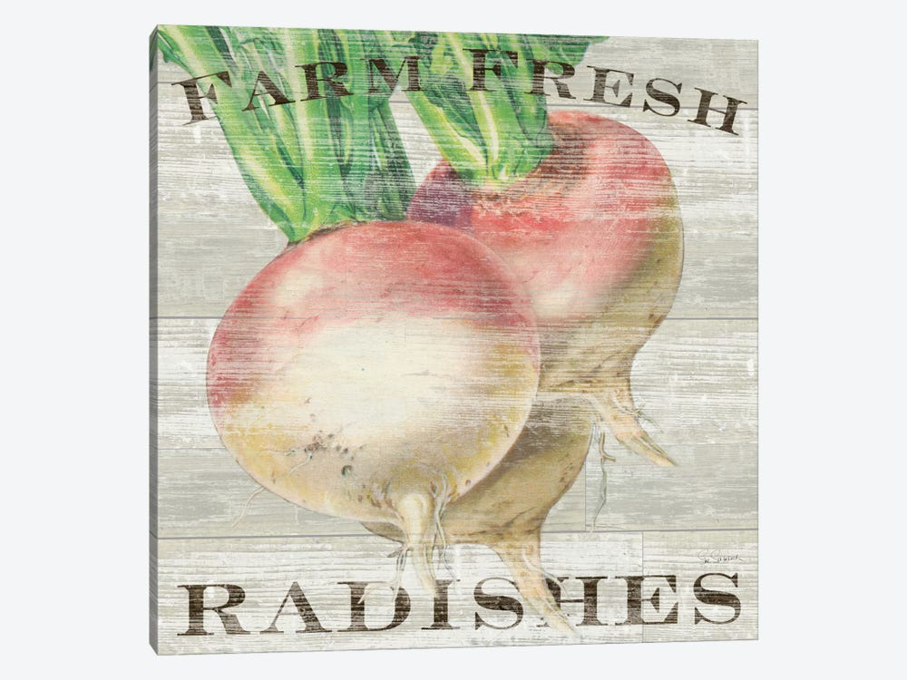 Farm Fresh Radishes by Sue Schlabach 1-piece Canvas Art Print