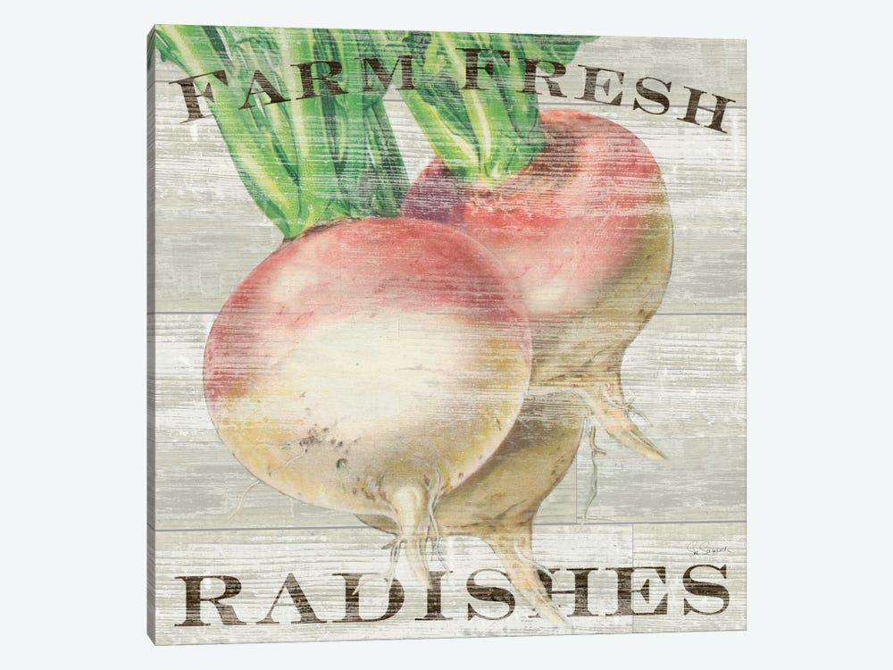 Farm Fresh Radishes by Sue Schlabach 1-piece Canvas Art Print