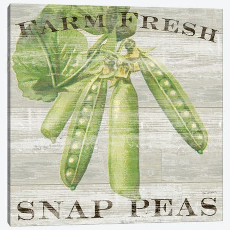 Farm Fresh Peas Canvas Print #WAC3739} by Sue Schlabach Canvas Wall Art