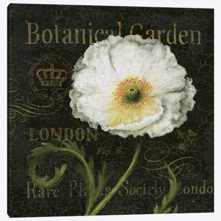 Botanical Garden II - Borderless Canvas Print #WAC374} by Daphne Brissonnet Canvas Print