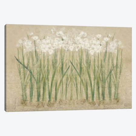 Narcissus Cool  Canvas Print #WAC3823} by Cheri Blum Canvas Artwork