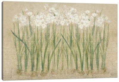 Narcissus Cool  Canvas Art Print