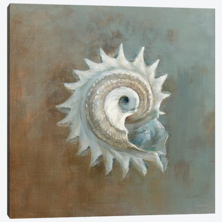 Treasures From The Sea III Canvas Print #WAC3843} by Danhui Nai Canvas Wall Art