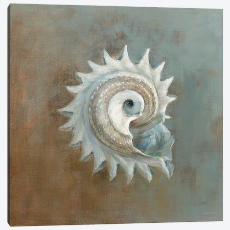 Treasures From The Sea III Canvas Print #WAC3843} by Danhui Nai Canvas Wall Art