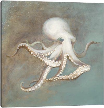 Treasures from the Sea V Canvas Art Print