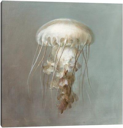 Treasures from the Sea VI Canvas Art Print