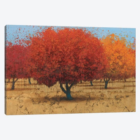 Orange Trees II Canvas Print #WAC3874} by James Wiens Canvas Art