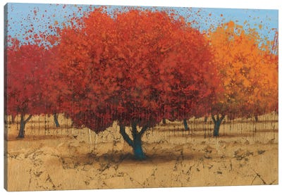 Orange Trees II Canvas Art Print