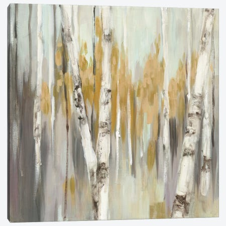 Silver Birch I Canvas Print #WAC3881} by Julia Purinton Canvas Wall Art