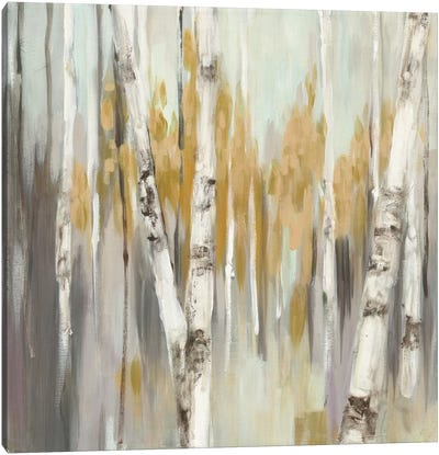 Silver Birch I Canvas Art Print