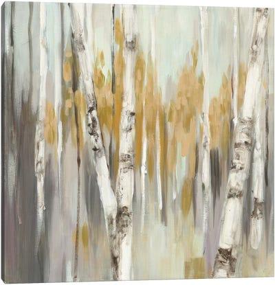 Silver Birch I Canvas Art Print