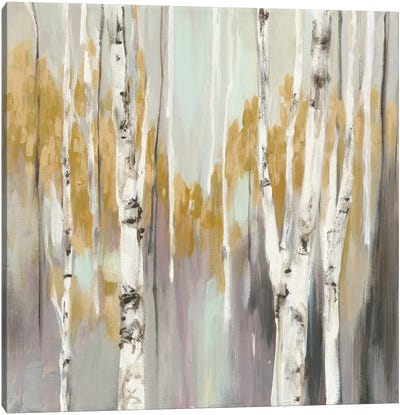 Silver Birch II Canvas Art Print