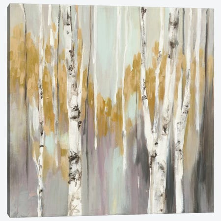 Silver Birch II Canvas Print #WAC3882} by Julia Purinton Canvas Wall Art